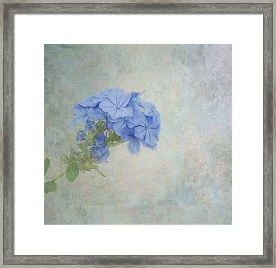 Subtle Blues Framed Print