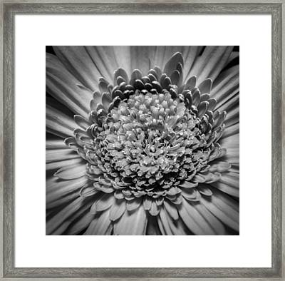 Subtle Complexity In Black And White Framed Print