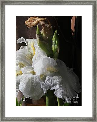 Framed Print featuring the photograph Subtle Finale by Geri Glavis