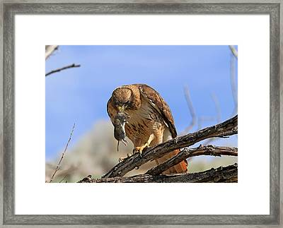 Successful Hunt Framed Print by Donna Kennedy