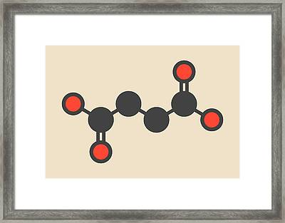 Succinic Acid Molecule Framed Print