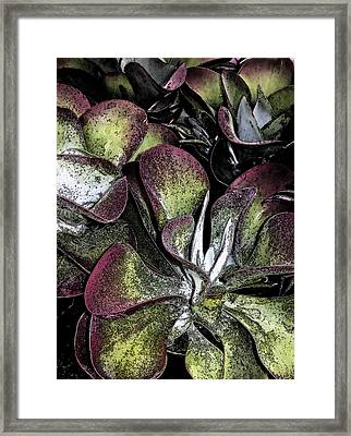 Succulent At Backbone Valley Nursery Framed Print by Greg Reed