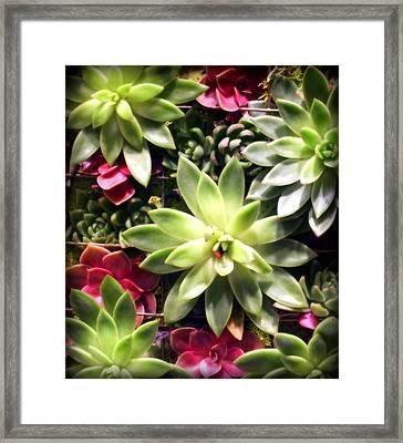 Succulent Beauties Framed Print