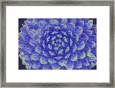 Framed Print featuring the digital art Succulent - Blue by Jane Schnetlage