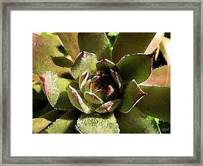 Succulent Framed Print by Cole Black