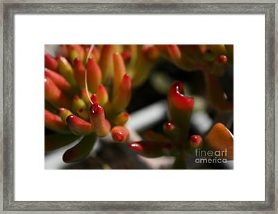 Succulent Framed Print by Crissy Boss