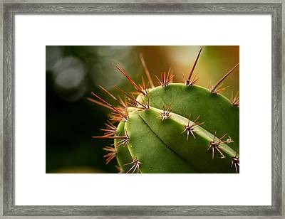 Succulent Defences Framed Print by Jacqui Collett
