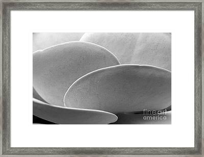 Succulent Discs Framed Print