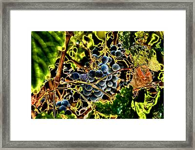 Succulent Grapes Framed Print by David Patterson