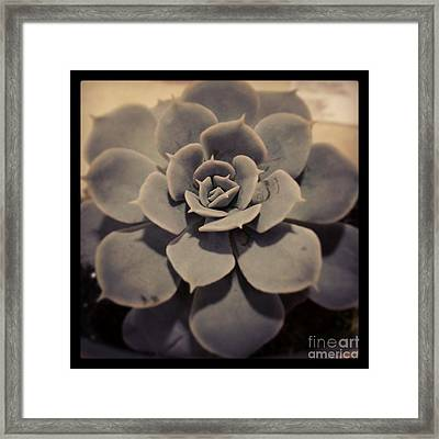 Succulent Framed Print by Heather L Wright