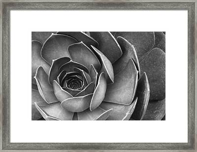 Succulent In Black And White Framed Print by Ben and Raisa Gertsberg