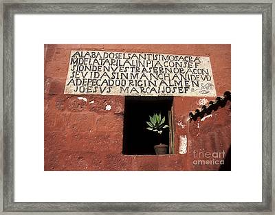 Succulent In Window Framed Print