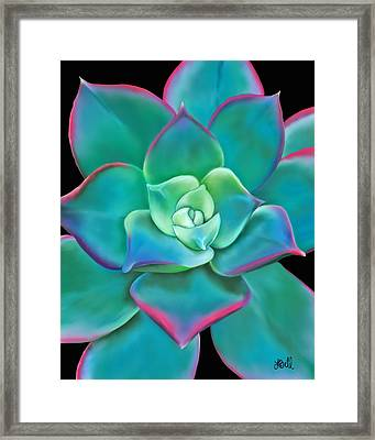 Succulent Aeonium Kiwi Framed Print by Laura Bell