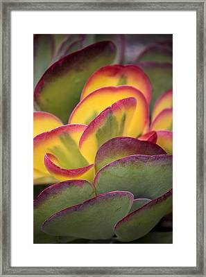 Succulent Light Framed Print