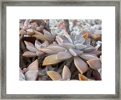 Framed Print featuring the photograph Succulent by Michele Kaiser