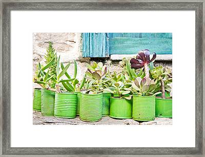 Succulent Plants Framed Print by Tom Gowanlock