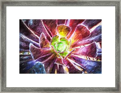 Succulent Purple Aeonium Leaves Painted Framed Print by Rich Franco