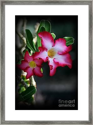 Succulent Red Bloom Framed Print