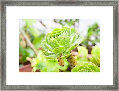 Succulent Framed Print by Tom Gowanlock