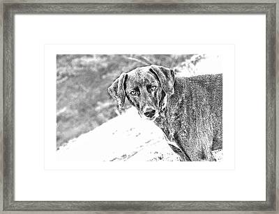 Such A Pretty Girl Framed Print by Peggy Collins