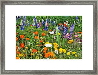 Such Beauty Framed Print