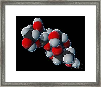Sucrose Molecular Model Framed Print by Evan Oto