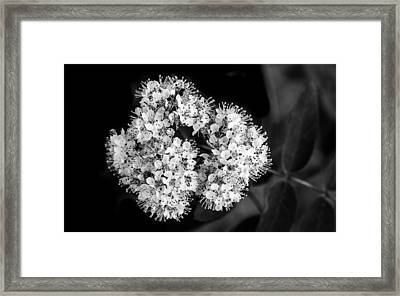 Suction Framed Print