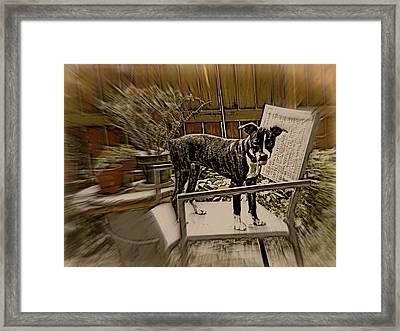 Sufferin Succotash Framed Print by Tg Devore