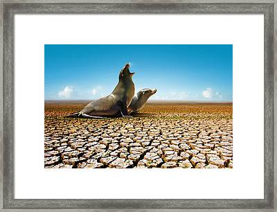 Suffering Seals Framed Print by Carlos Caetano