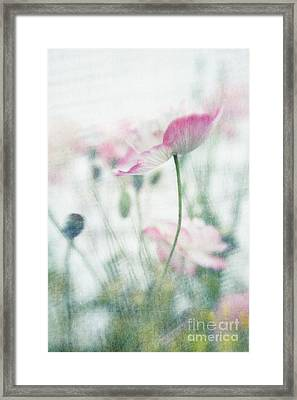 suffused with light III Framed Print