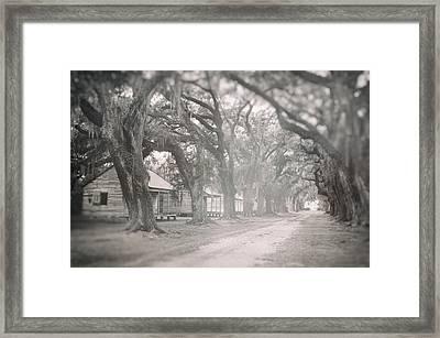 Sugar Cane Plantation Framed Print