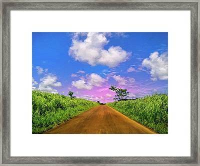 Sugar Cane Sunrise Framed Print