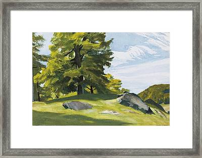 Sugar Maple Framed Print