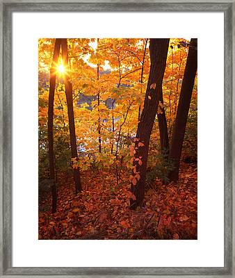Sugar Maple Sunrise Framed Print