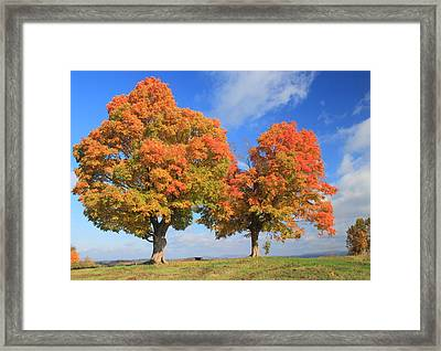 Sugar Maples On Hilltop In Autumn Framed Print