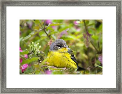 Sugar Spice And Everything Nice Framed Print
