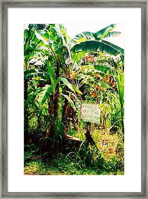 Sugarcane Framed Print