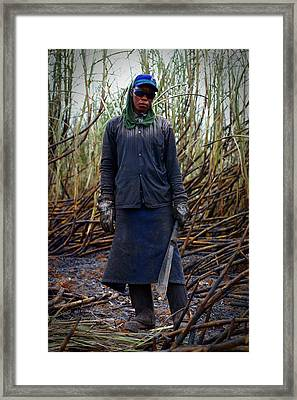 Framed Print featuring the photograph Sugarcane Slash by Henry Kowalski