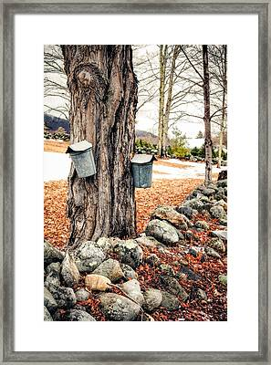 Sugaring Framed Print by Robert Clifford