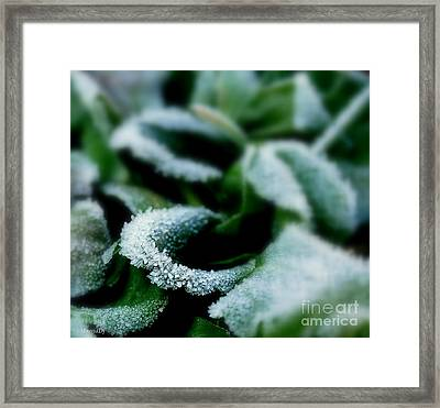 Sugarlike Framed Print