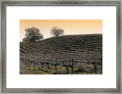 Suisun Valley Vinyards Framed Print