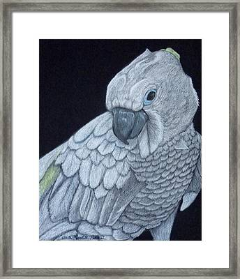 Sulpher-crested Cockatoo Framed Print by Anita Putman