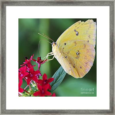 Sulphur Squared Framed Print by Pamela Gail Torres