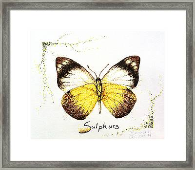Sulphurs - Butterfly Framed Print by Katharina Filus
