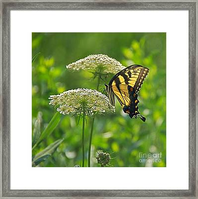 Sultry Summer Day Framed Print