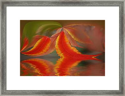 Sumach And Reflection Framed Print