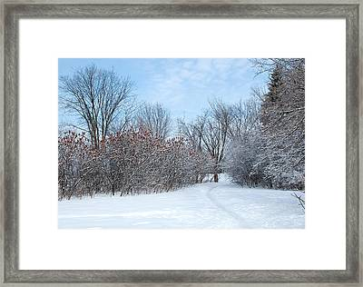 Sumacs Alongside The Path. Framed Print by Rob Huntley