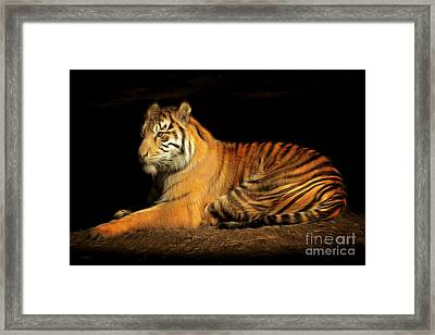 Sumatran Tiger 20150211brun Framed Print by Wingsdomain Art and Photography