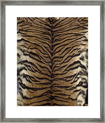Sumatran Tiger Skin Framed Print by Science Photo Library