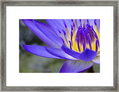 Summer Abundance Framed Print by Priya Ghose